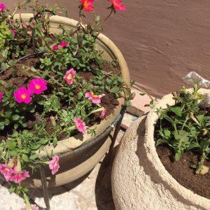 כדים לגינה