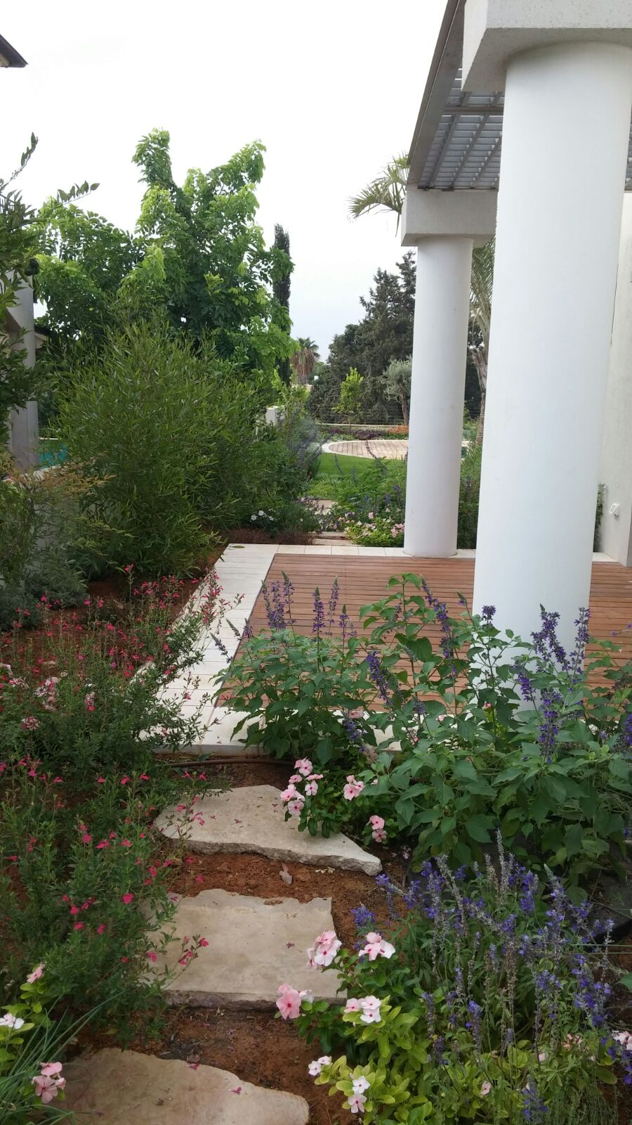 large garden design project in Caesarea 04