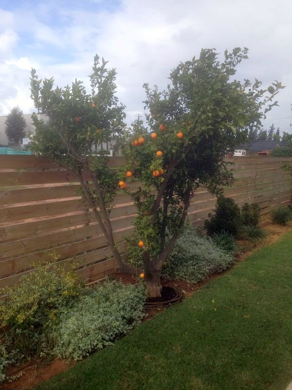 the advantages of wooden fences