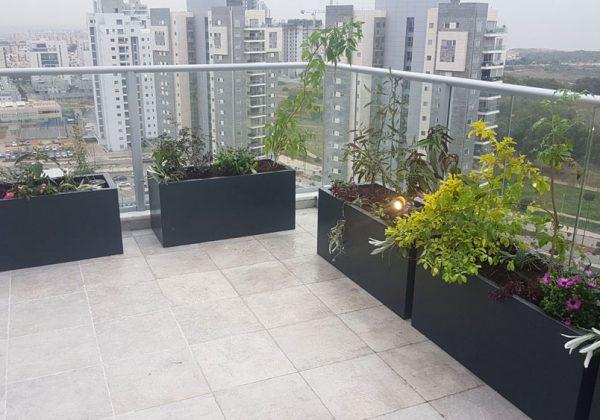 הקמת גינת גג לפנטהאוז בשרון