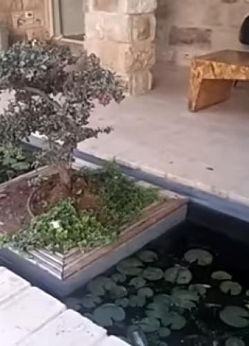 הקמת בריכת נוי בגינה עם אלמנטים מיוחדים