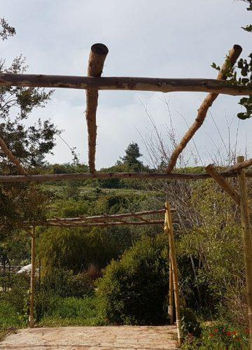 הקמת סוכת גפנים בכרם אמפורה