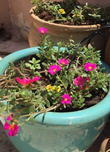 איך לבחור כדים לגינה ולעציצים בבית?