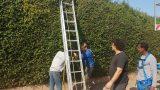 High-altitude gardening works 7