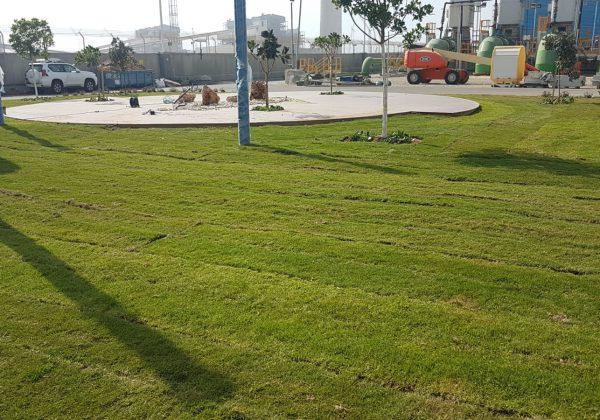 עיצוב גינה  ציבורית  – ריאה ירוקה