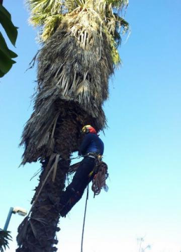 גיזום עצים מקצועי, לטובתכם ולטובת העץ
