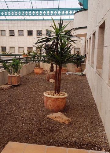 עציצים מלאכותיים איכותיים לשיפור נראות הגינה