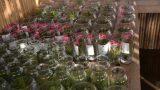 air plants _glass 01