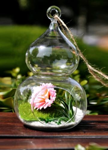 צמח אוויר לעיצוב הגינה
