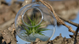 air-plants-glass-balls