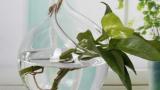 air-plants-open-glass