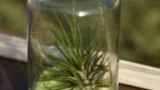 air-plants-retro-milk 2