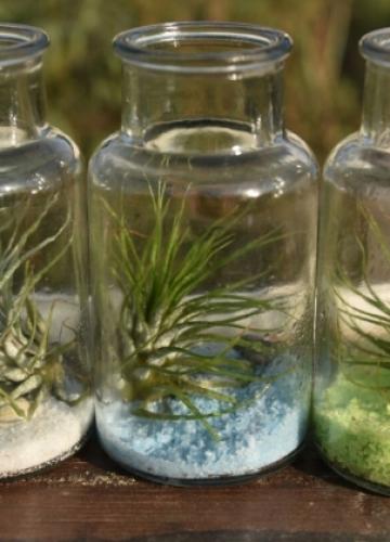 צמח אוויר – פשוט להוסיף צבע לבית