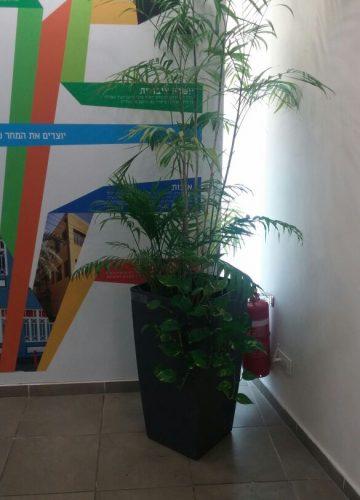 פרויקט צמחיה מלאכותית עזרה ובצרון משרדים