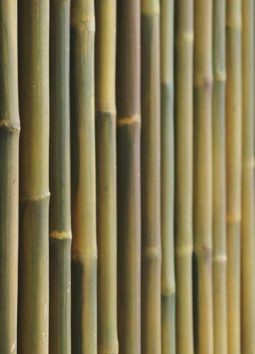גדר במבוק – להביא את הטבע הביתה