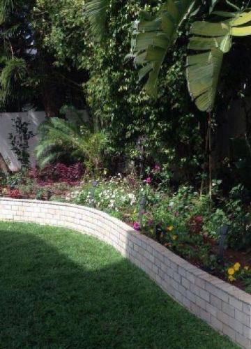 איך לתכנן גינה בסגנון גן טרופי?