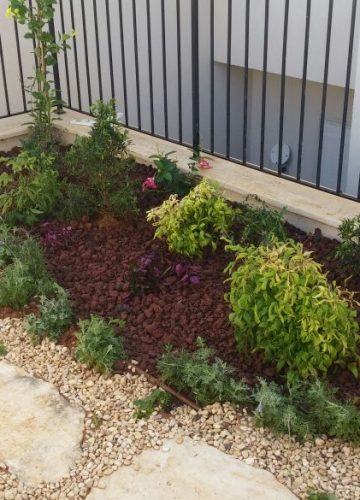 עיצוב גינה בשרון בשילוב חיפוי קרקע, צמחיה ואבני מדרך