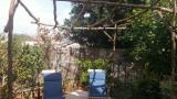wineyard garden 02