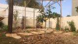 wineyard garden 03